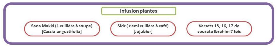 infusion-plante